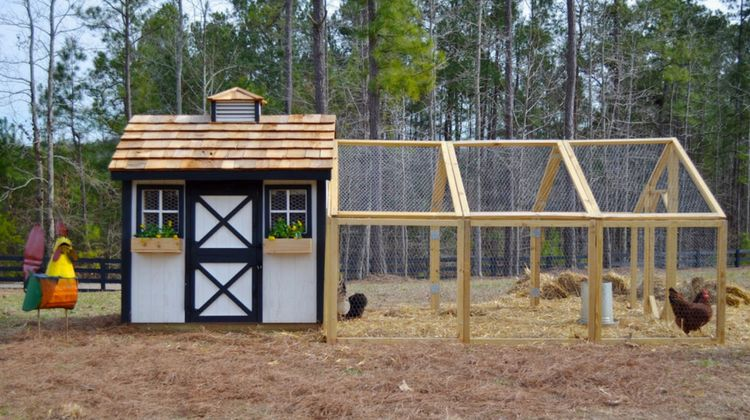 April 27, 2017 By Joanna Medalla 6 Comments. Learn how to build a backyard  chicken coop ... - How To Build A Backyard Chicken Coop Homesteading
