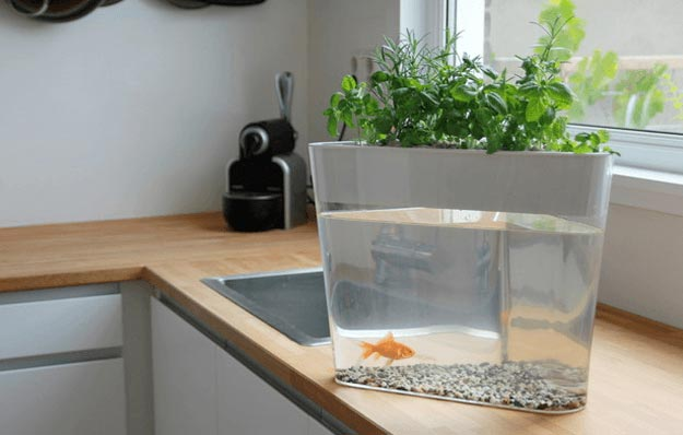 Hydroponic systems round up 33 best hydroponic ideas for for Hydroponic fish tank