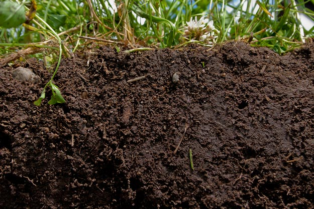 In Conclusion | Homesteader's Guide to Soil Improvement