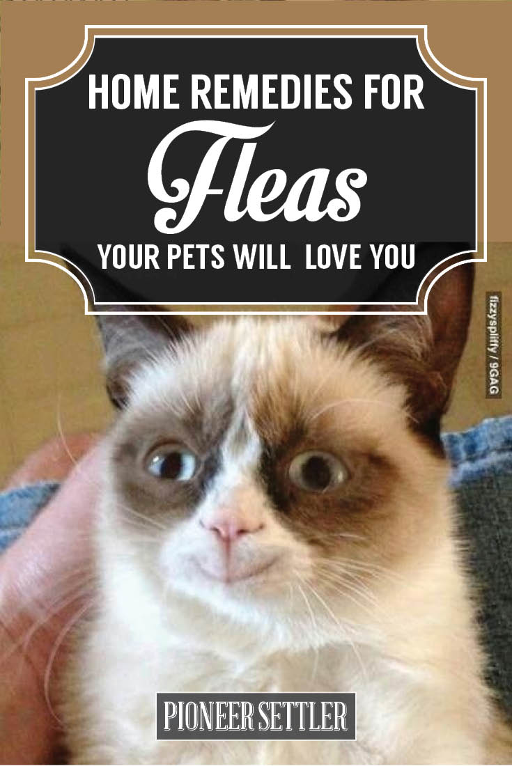 Check out Basic Home Remedies For Fleas (Protect Your Pets) at https://homesteading.com/home-remedies-for-fleas/