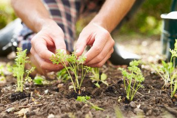 Self-Sustaining Ideas For Living The Homesteader's Dream