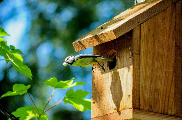 Provide Shelter To Attract More Backyard Birds - Keep reading for more ideas