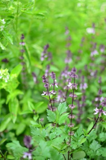 8 Culinary Herbs that Grow Well in the Shade   20 Garden Tips And Hacks That Will Help You Become a Gardening Expert