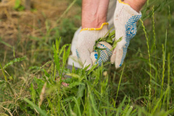 Weeding Made Easy Tips & Tricks | 20 Garden Tips And Hacks That Will Help You Become a Gardening Expert