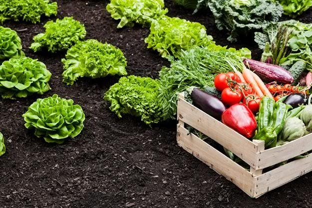 When Are Fruits and Vegetables in Season? | Try Many Types Of Farming For You And Your Homestead