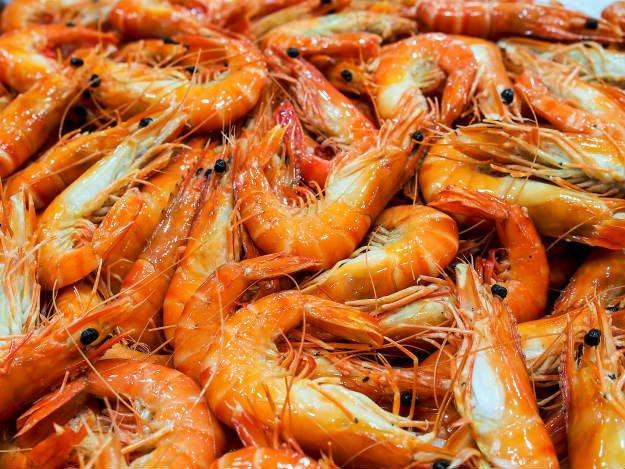prawns Non-Traditional Farm Animals | 10 Uncommon Animals Found on The Farm