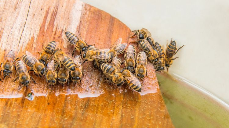 Beginner's Guide To Keeping Bees