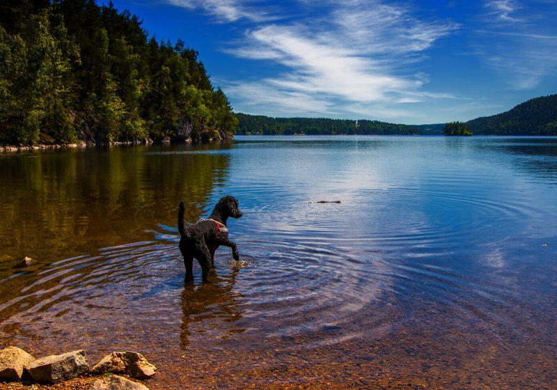 köpek getirme sırasında banyo gölü alır |  av köpeği yetiştirmek